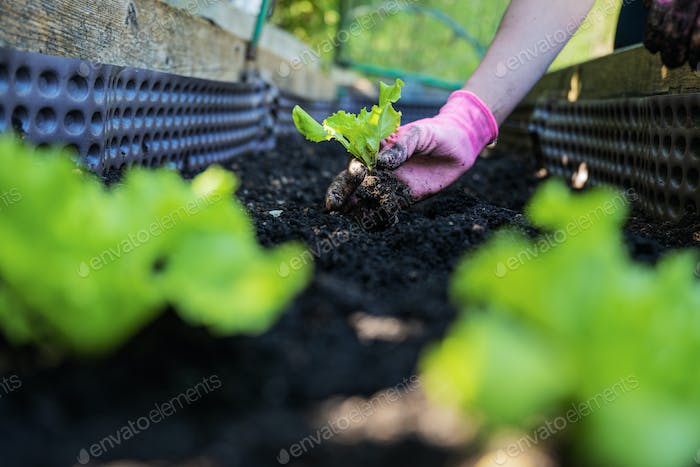 Low angle view of a woman gardening