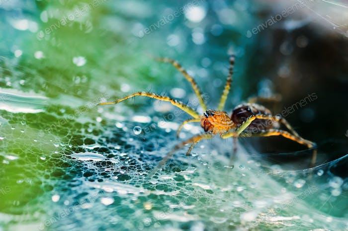 Nahaufnahme der Spinne im Netz