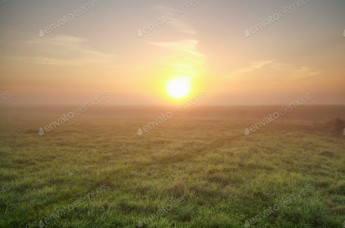 misty sunrise over green meadow