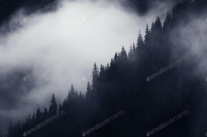 Dark mountain forest with fog rising