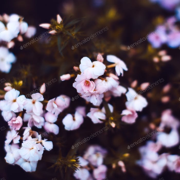 Beautiful flowers Background. Minimal style