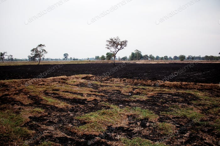 Grasses burned on fields