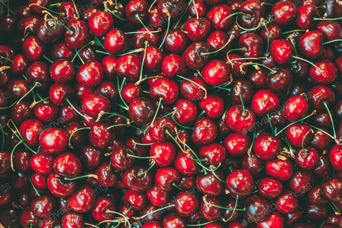 Fresh red ripe sweet cherry berries forming background on farmer