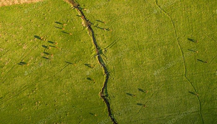 Argentinische chilenische patagonische Landschaft mit frei weidenden Kühen. Luftaufnahme der Gruppe von Kühen in
