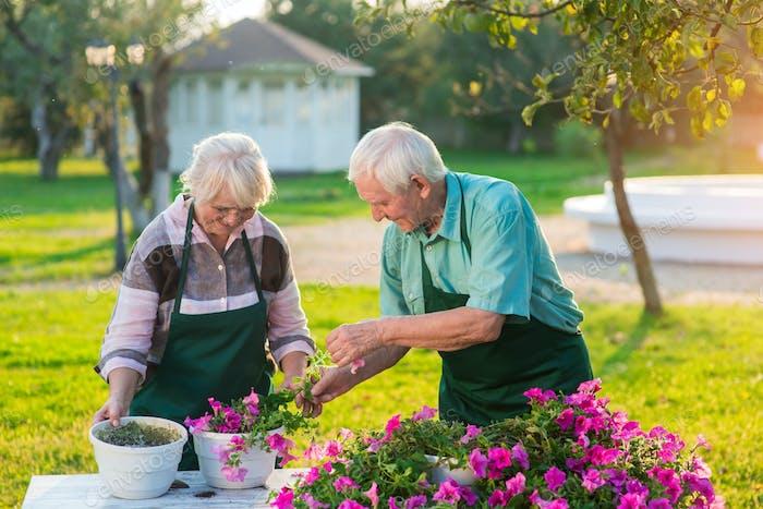 People in aprons transplanting flowers