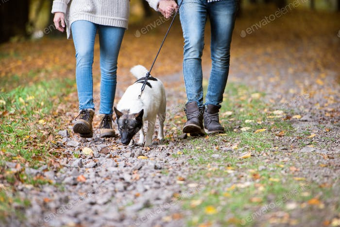 Unrecognizable couple with dog walking in autumn forest