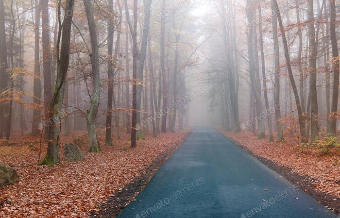 Road in the autumn beechwood