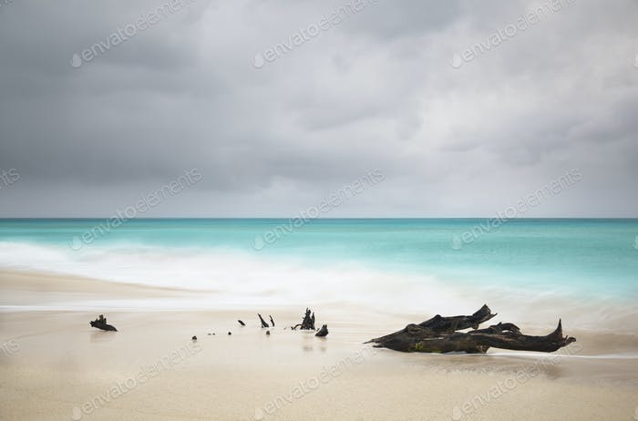 Stormy Caribbean Beach With Driftwood, Antigua