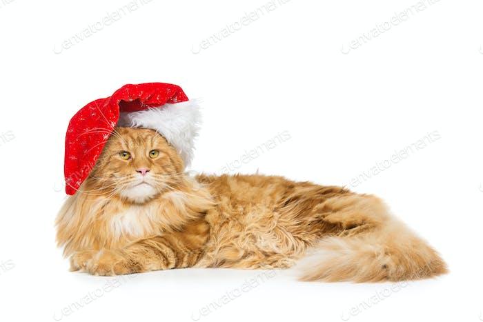 Große Ingwerkatze in Weihnachtsmütze