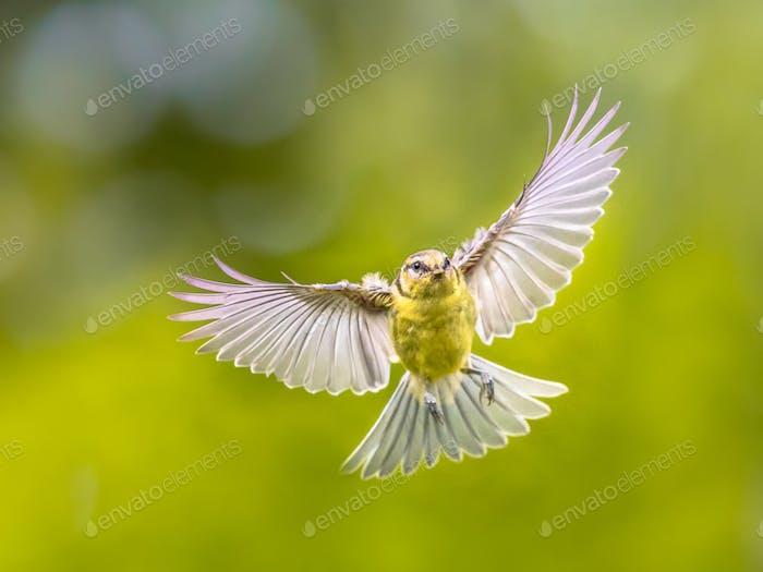 Bird in Flight on vivid garden background