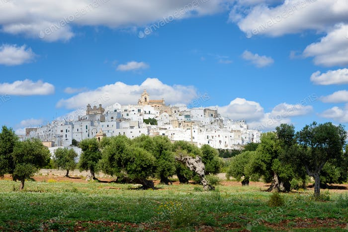 Ostuni, the white city of Puglia with olive trees
