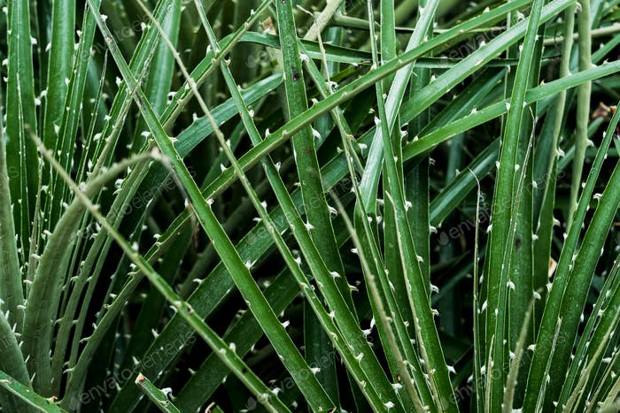 Close up of spiky green leaf blades.