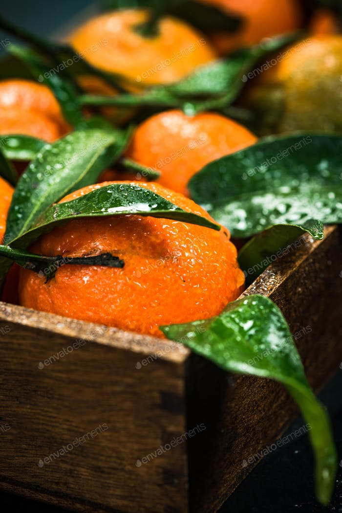 Fresh tangerines or clementines, whole with leaves