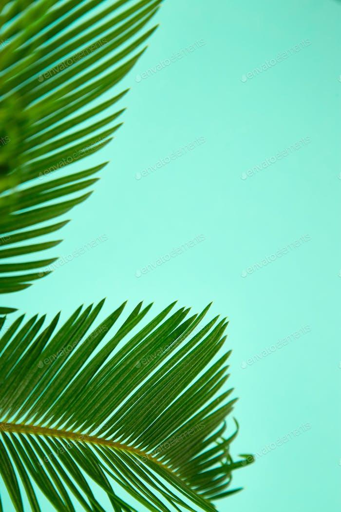 Sommergrüner Palmenhintergrund