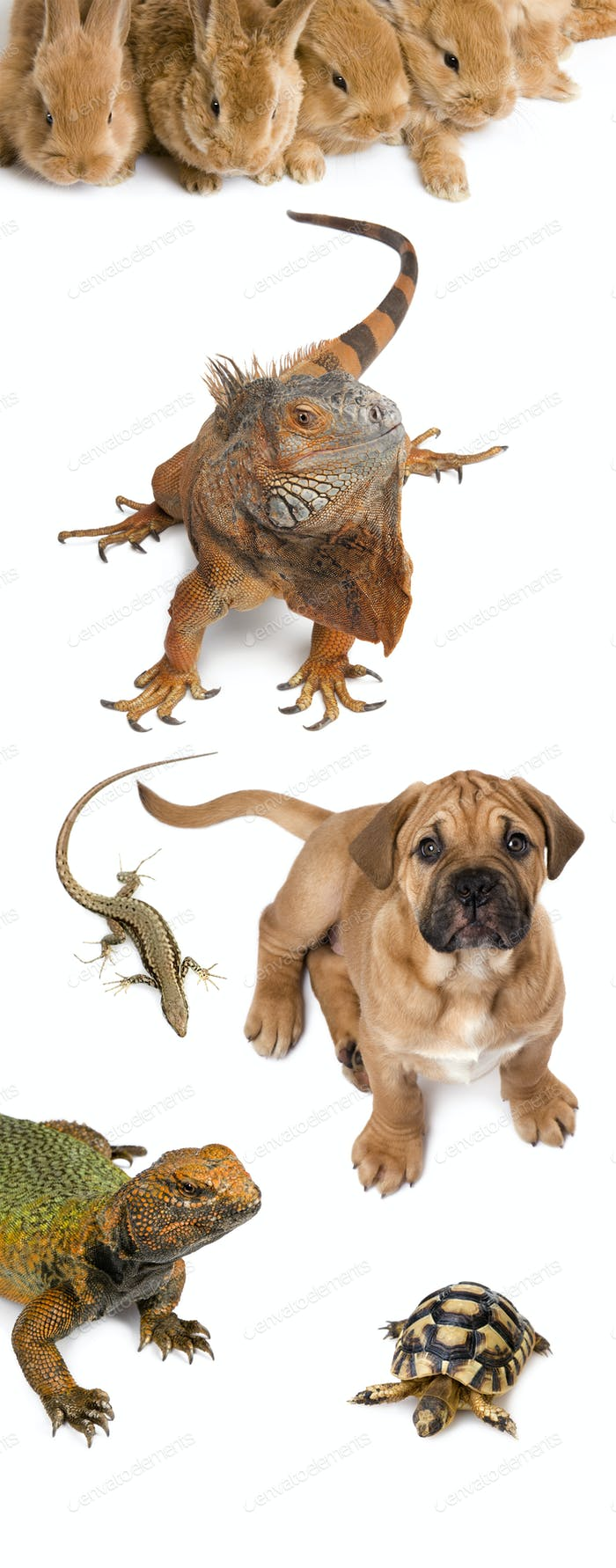 Group of animals in front of white background, studio shot