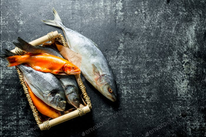 A variety of marine fish on the tray.
