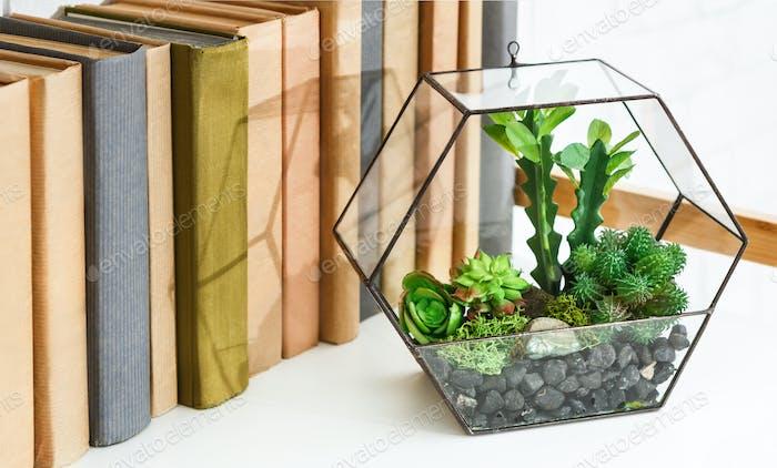 Florarium vase with plants on book shelf