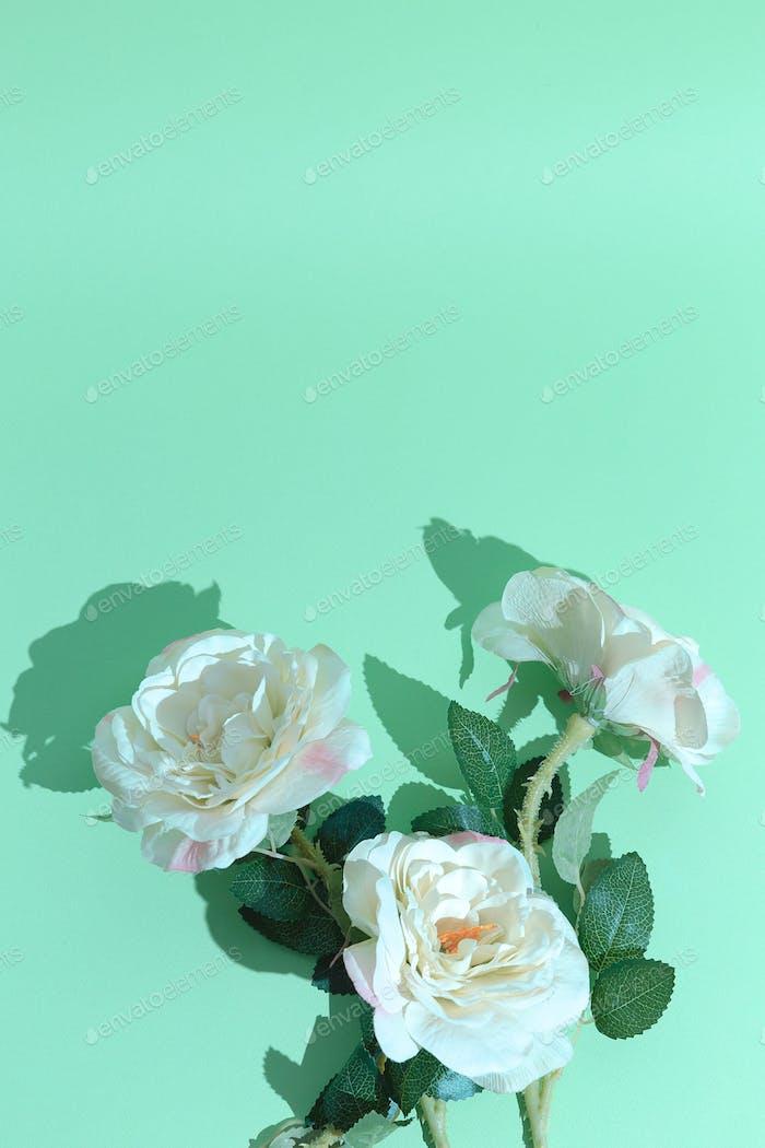 Minimal aesthetic still life monochrome design. Aqua menthe colours trends.  Roses flowers aesthetic