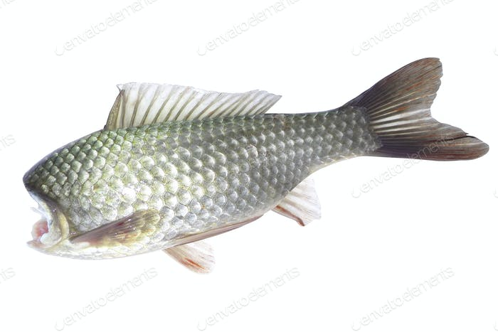 fish without head on a white background