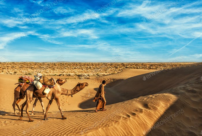 Cameleer camel driver with camels in dunes of Thar desert