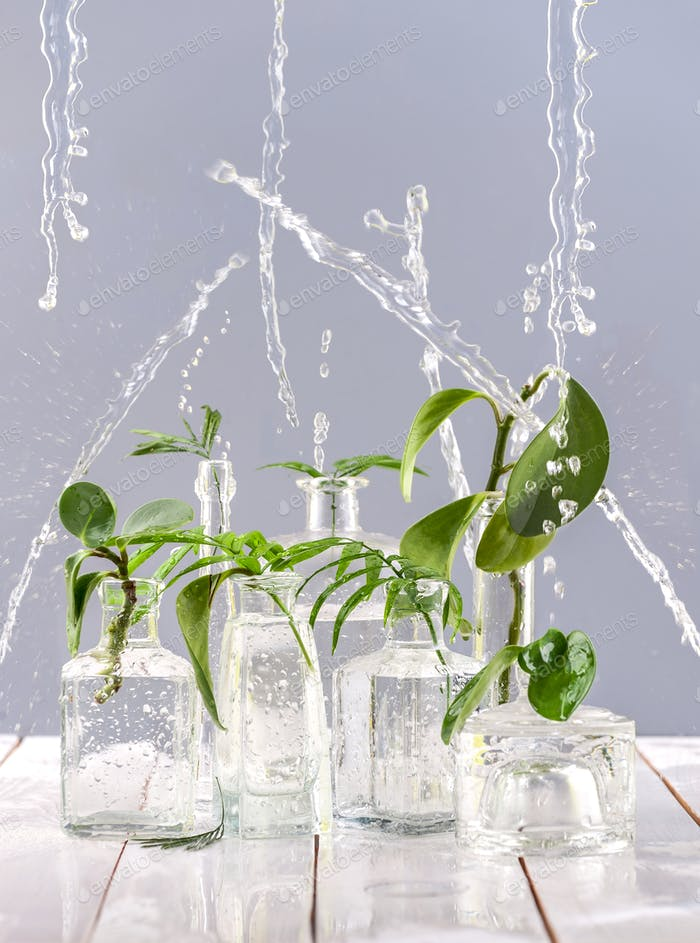 Green leaves in glass vases and bottles under the spray of water
