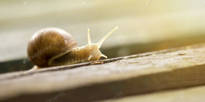 Snail website banner