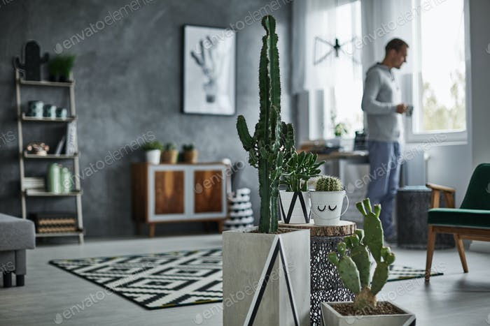 Decorative cactus in simple pot