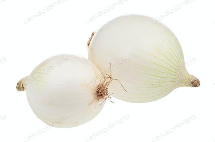 zwei Zwiebeln reife weiße Zwiebel isoliert auf weiß