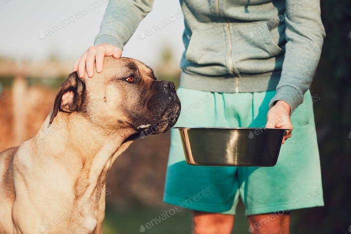 Feeding of the huge dog