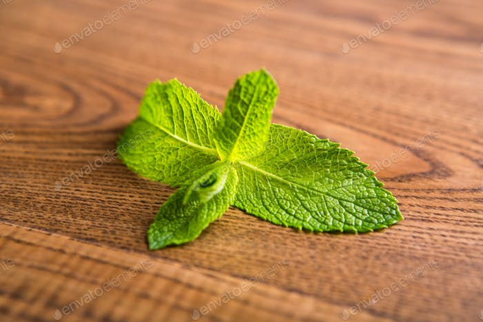 Green leaves of mint