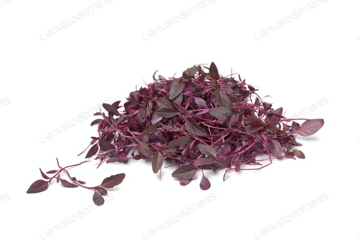 Red Amaranth sprouts