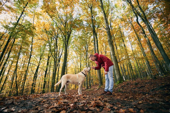 Man with dog autumn forest