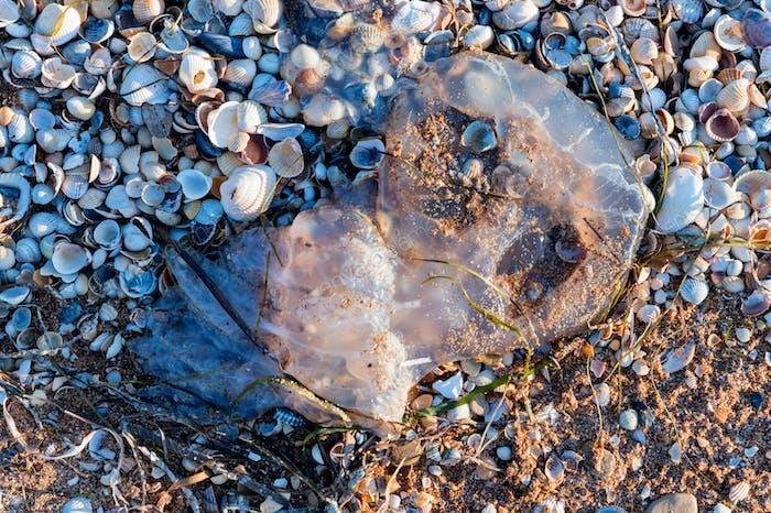 Nahaufnahme von großen Quallen an Land am Strand gewaschen