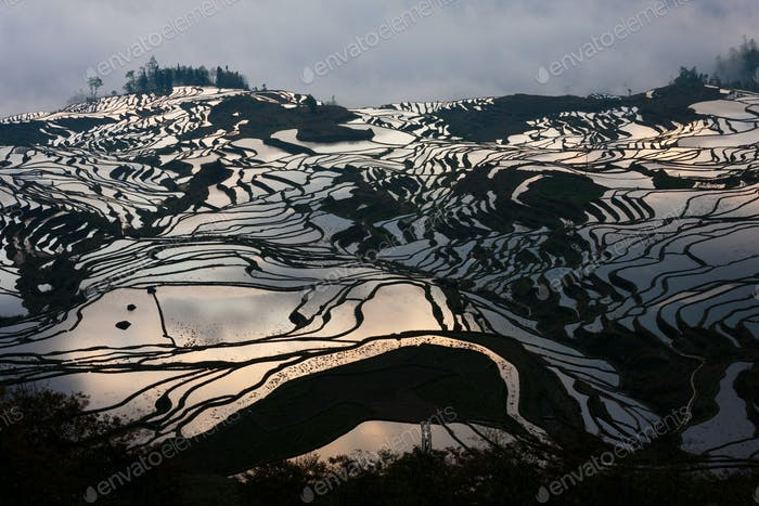 Terraced rice fields, Yuanyang, China