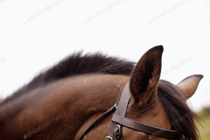 Cropped image of horse against clear sky