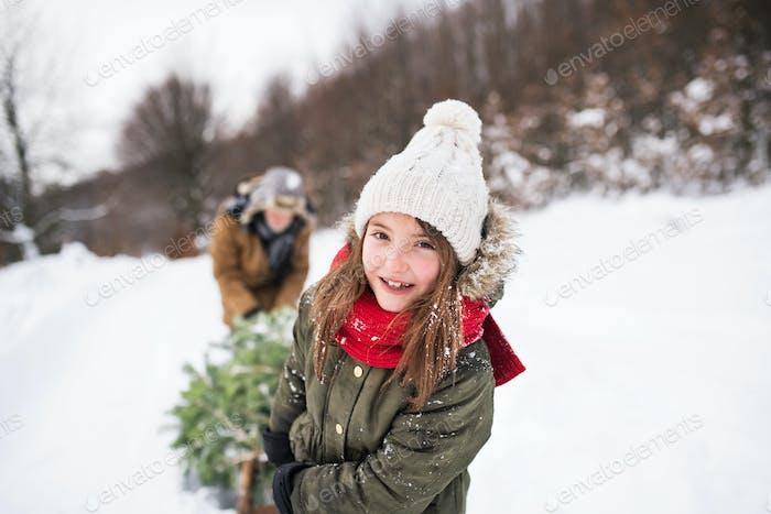 Grandfather and small girl getting a Christmas tree in forest.