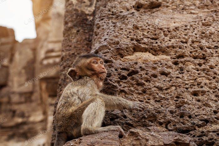 Monkey is sitting on stone