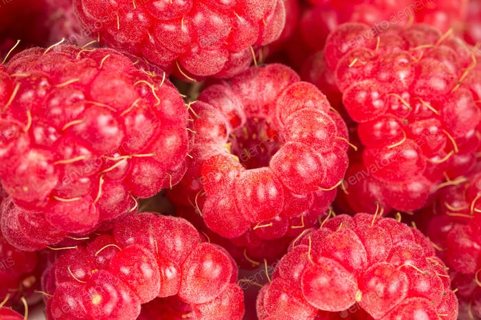 Ripe juicy raspberries.