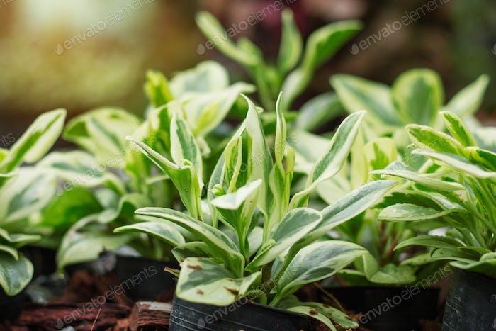 Ornamental plants in pots