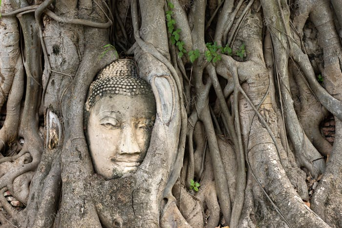 Ayutthaya Buddha Head in Tree Roots, Buddhist temple Wat Mahatha