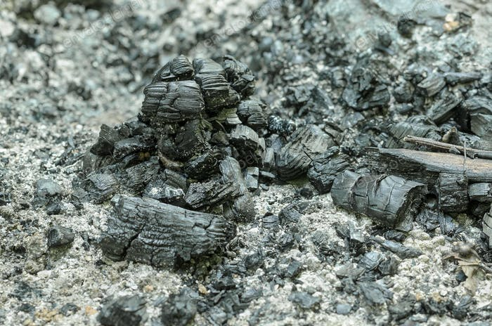 Reste eines erloschten Feuers mit verkohlten Ästen und Asche