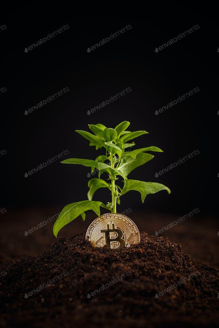 Concepto de crecimiento del dinero Digital