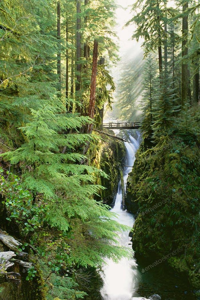 Die  Sol Duc Falls befinden sich im Wald des Olympic National Park, Washington State.