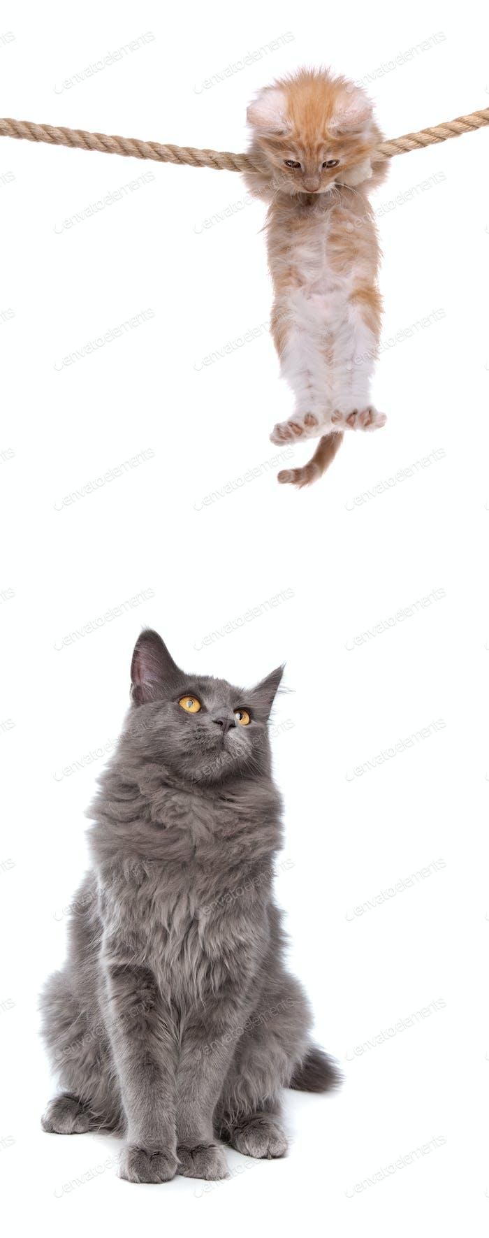 Katze und Kätzchen