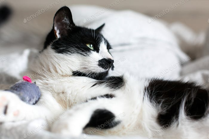 Cute black and white cat with moustache playing with mouse toy on bed