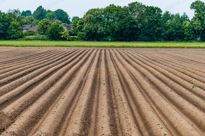 Ploughed field, springtime agricultural background