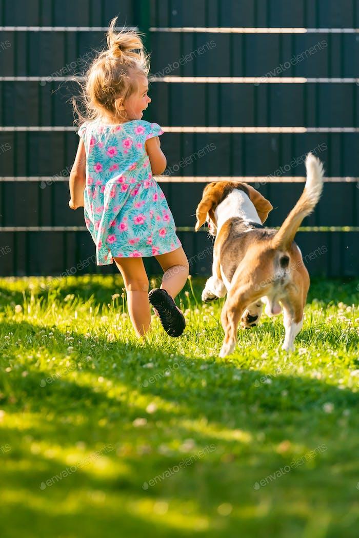 Baby Mädchen läuft mit Beagle Hund im Garten im Sommer Tag. Haustier mit Kindern Konzept
