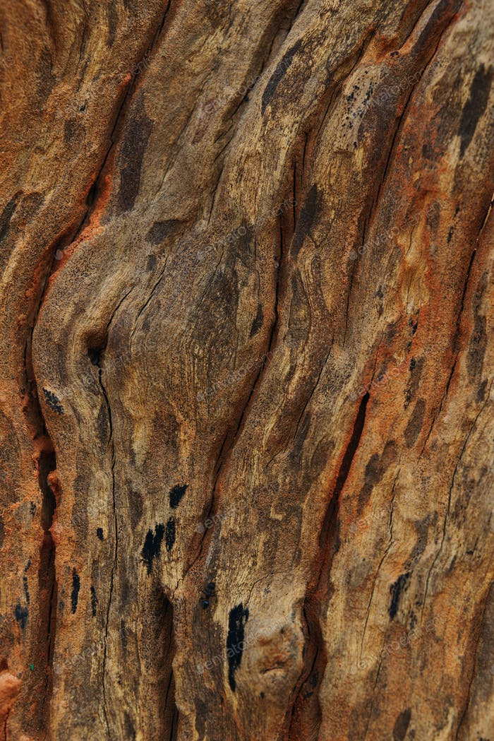 Background of decaying tree trunk