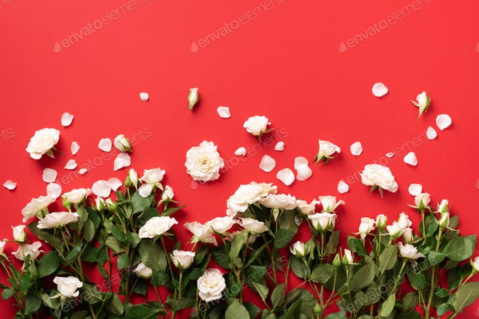 White roses and flowers petals over red background. Summer and spring composition. Flat lay, top