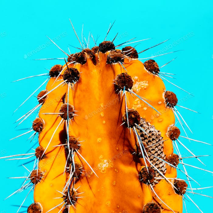 Cactus Honey. Minimal fashion art gallery